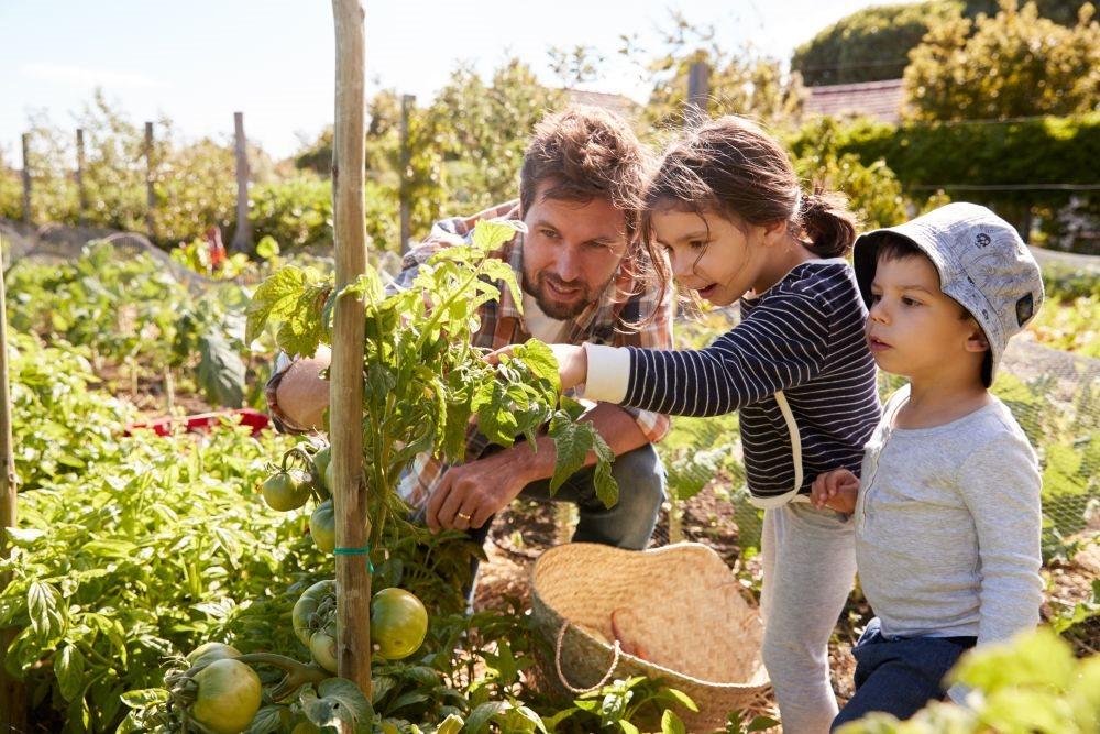 deca koja gaje povrce jedu zdravije_653717209